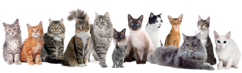 //purrfurredcattery.co.nz/wp-content/uploads/2016/02/cats.png